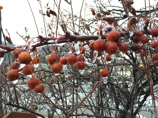 Berries in Winter